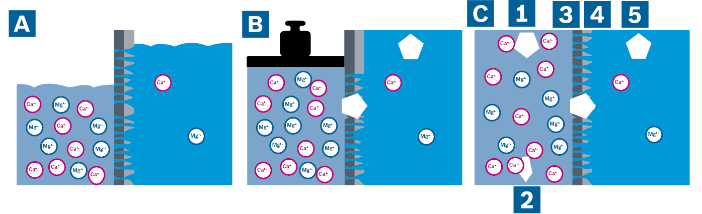 Visualisation of osmotic pressure (A), reverse osmosis by pressure charging on the concentrate side (B) and the continuous reverse osmosis process (C)